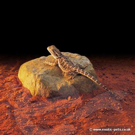 Bearded Heat L by Exo Terra Heat Wave Rock With Lizard Exo Terra Heat Rock