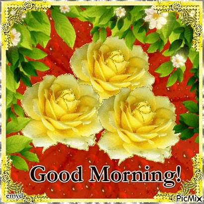 Morning Yellow Rose Lovethispic