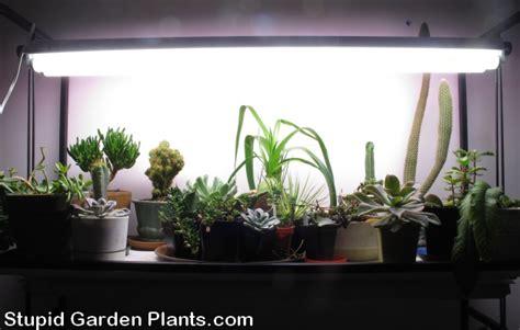 winter grow lights plants in the house stupid garden