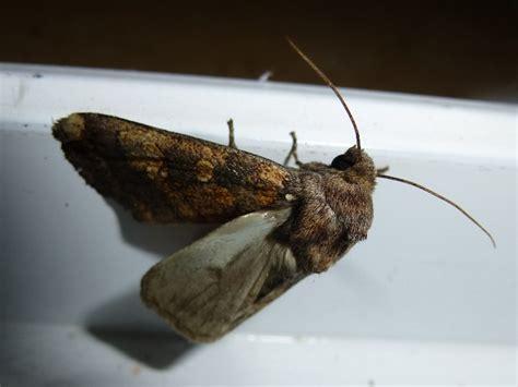 http://www.vanderheyden-vonseth.de/galerie_lepidoptera.htm