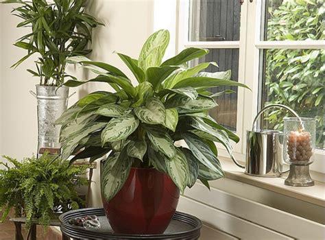 le pour plante interieur soigner les plantes d int 233 rieur en 233 t 233