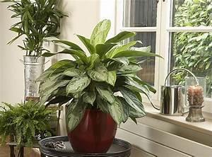 Plante Verte D Appartement : soigner les plantes d 39 int rieur en t ~ Premium-room.com Idées de Décoration