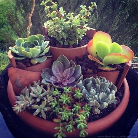 succulent gardens in pots 111 best images about broken pots by others on fairies garden miniature gardens and