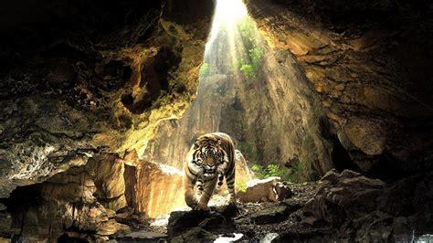 neuseeland höhle der glühwürmchen die 80 besten hintergrundbilder der sch 246 nen tiere f 252 r desktop