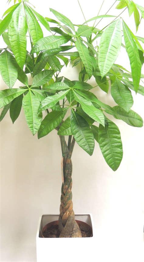 plantes vertes d ext 233 rieur photos de magnolisafleur