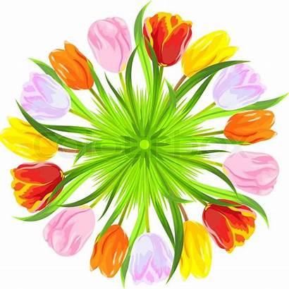 Orange Tulips Spring Vector Yellow Pink Circle
