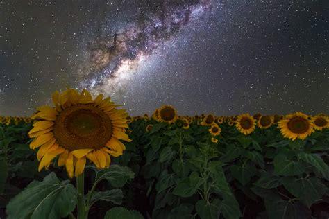 Sunflowers Australia Night Sky Stars Space Galaxy