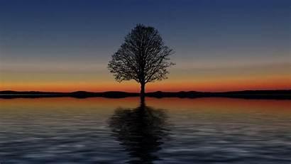 Tree Lonely Sunset Reflection Horizon 1080p Minimalism