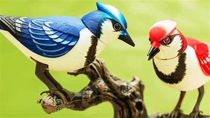 Birds Bird Cartoon Conspiracy Theory Qanon Arent