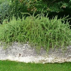 Winterharte Pflanzen Liste : die besten 17 ideen zu winterharte kr uter auf pinterest ~ Michelbontemps.com Haus und Dekorationen