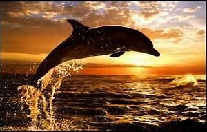 Schöne Delfin Bilder : delphin s e lustige sch ne tiere pinterest unterwasserwelt tier und wasser ~ Frokenaadalensverden.com Haus und Dekorationen