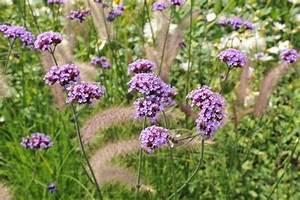 Kleine Fliegen In Blumen : die artenvielfalt im beet und dem balkongarten mit den ~ Lizthompson.info Haus und Dekorationen