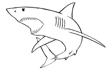 gallery  shark mouth open drawing image file