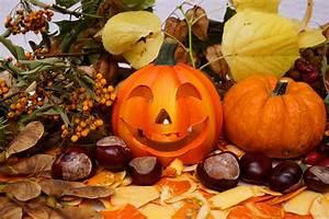 Bilder Herbst Kostenlos : halloween herbst 1 lizenzfreie fotos bilder kostenlos herunterladen ohne anmeldung ~ Somuchworld.com Haus und Dekorationen