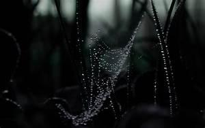Spider Web HD wallpaper