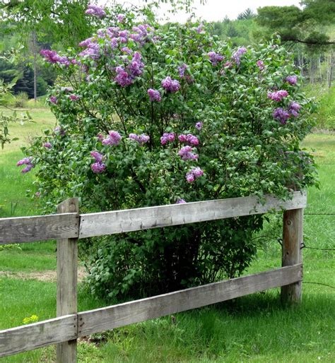 Garden Solutions by Late May Flowers New Hshire Garden Solutions