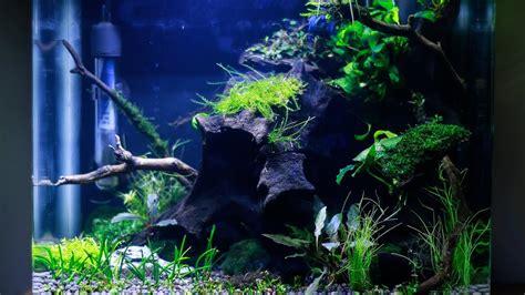 Betta Aquascape by Nano Aquascape Low Light Betta Planted Aquarium