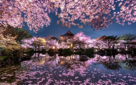 spring night flowers nature background wallpapers