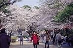 上野櫻花祭 - MOOK景點家 - 墨刻出版 華文最大旅遊資訊平台