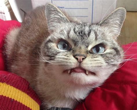 Interneta varonis - kaķis, kurš izskatās pēc īsta vampīra ...