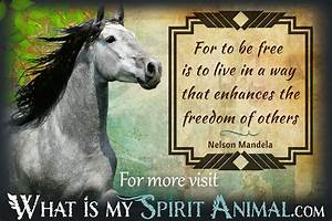 Horse Quotes & ... Free Horses Quotes