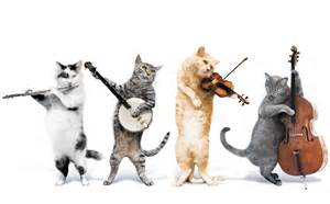 cat songs cats band cats animals wallpapers