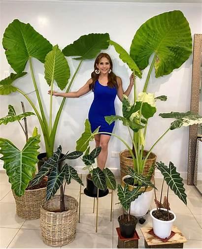 Gretchen Fullido Plants Plant Sharing Viral Ph