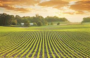 Minnesota Agriculture is Rooted Deep   Farm Flavor
