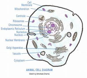 Animal Cell Parts