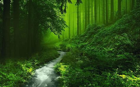 pretty forest beautiful forest hd image live hd wallpaper hq pictures images forest deep pinterest