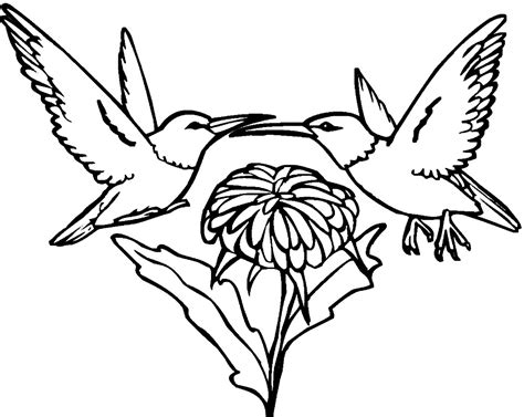 Printable Hummingbird Coloring Pages 21480