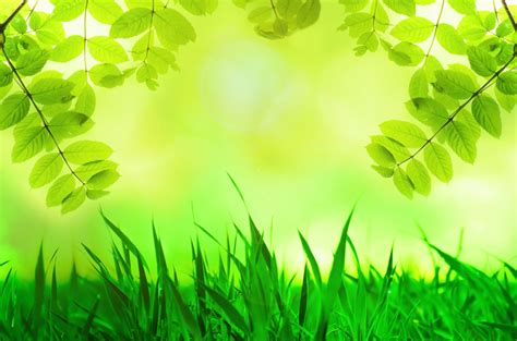 background warna hijau muda koleksi gambar hd