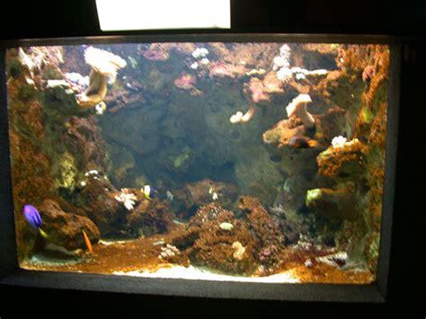 aquarium eau de mer fish only l aquarium de la porte dor 233 e aquarium r 233 cifal aquarium marin aquarium eau de mer reefguardian
