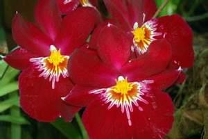 Bilder Blumen Kostenlos Downloaden : pflanzen in nanopics moderne gartengestaltung ~ Frokenaadalensverden.com Haus und Dekorationen