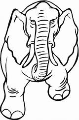 Elephant Coloring Pages Trunk Template Drawing Animal Angry Outline Animals Asian Draw Clipartmag Simple Getcoloringpages sketch template