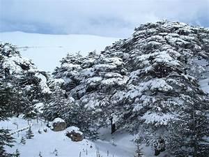 The Cedars of God | 365 Days of Lebanon
