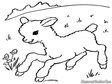 Coloring Kambing by Mewarnai Gambar Domba Mewarnai Gambar