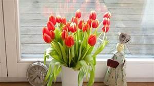 Tulpen In Vase : l nger frisch pflegetipps f r tulpen in der vase lifestyle ~ Orissabook.com Haus und Dekorationen