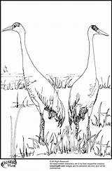Stork Coloring Couple Getcoloringpages Template Cartoon sketch template
