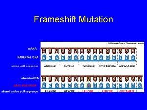 Frameshift Mutation - Bing images