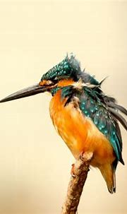 Kingfisher Wallpapers - Top Free Kingfisher Backgrounds ...