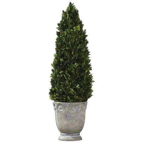Boxwood Evergreen Cone Topiary 60111