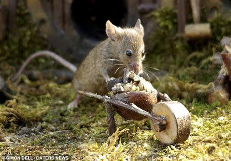 photographer creates hobbit style village wooden