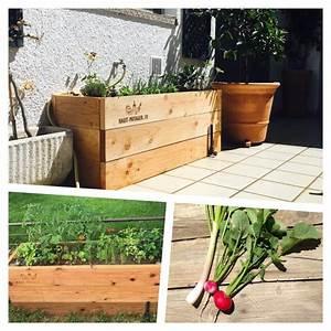 Cultiver Des Champignons De Paris Sans Kit : le blog de la sauge ~ Melissatoandfro.com Idées de Décoration