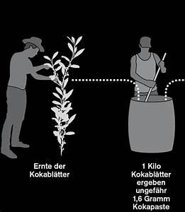 Preis Pro Gramm Berechnen : ole h ntzschel fluter kokain ~ Themetempest.com Abrechnung
