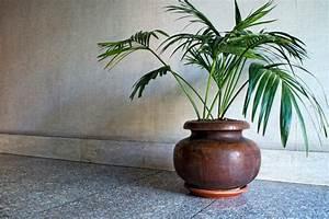 überwintern Von Palmen : palme berwintern wo wann und wie ~ Michelbontemps.com Haus und Dekorationen