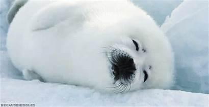 Seals Sox Save Sea Club Take