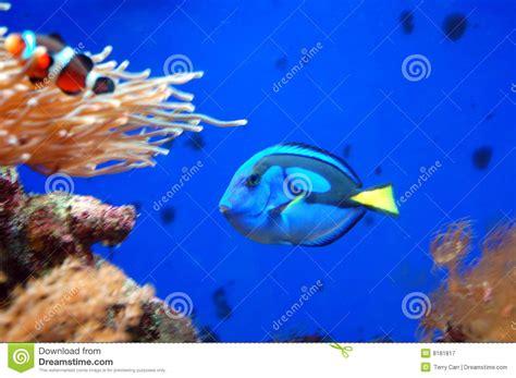 poissons dans un aquarium photographie stock libre de droits image 8181817