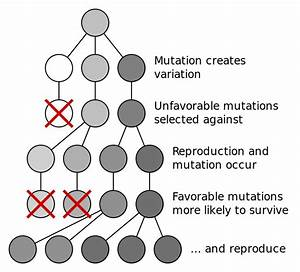 File Mutation And Selection Diagram Svg