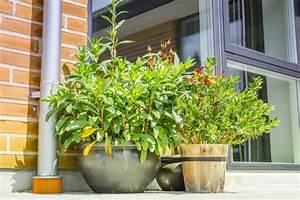 Blumenkästen Selber Bauen : pflanzk bel aus holz selber bauen detaillierte anleitung ~ Sanjose-hotels-ca.com Haus und Dekorationen